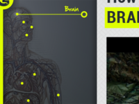 Anatomy Navigation