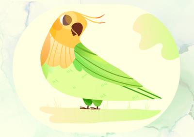 Parrot_Illustration