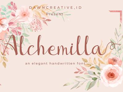 Alchemilla font fontself illustration design branding script font typography handwritten font