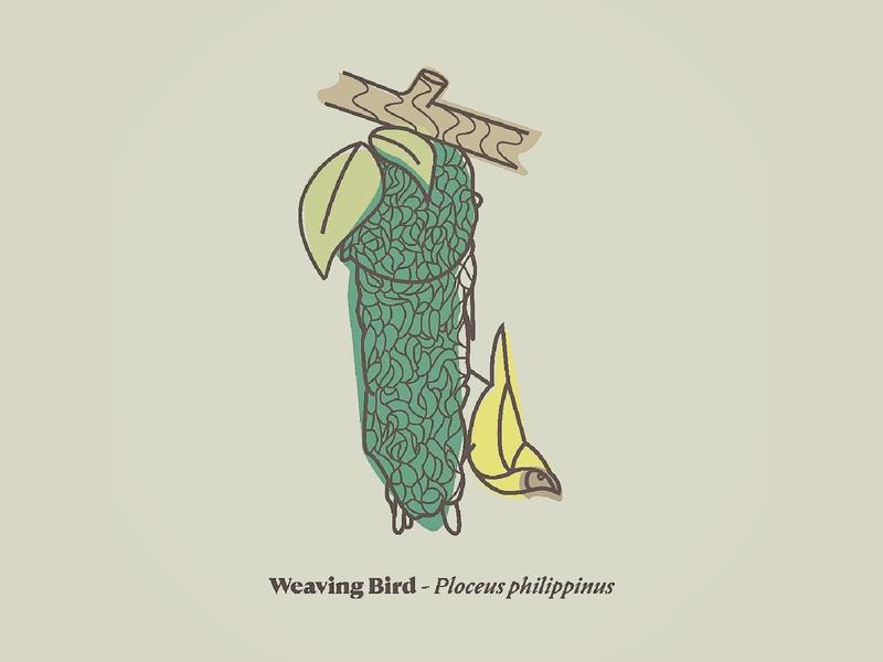 weaving bird 01