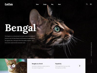Cat club home page kitty catlovers animals nature beauty bengal cat web uidesign main page concept