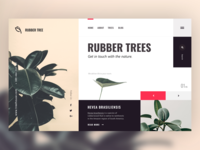 Rubber Tree