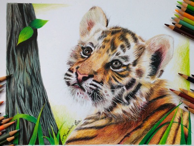 Drawing a cub