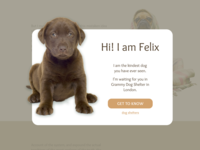 Pop-Up / Overlay (Dog Shelter's Landing Page)