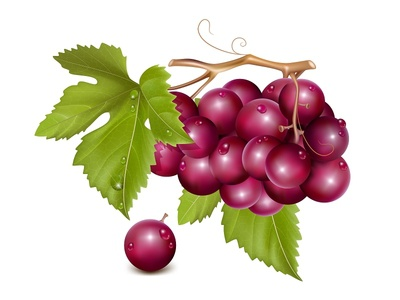 Vector illustration. Grape cluster with green leaves.