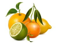 Vector illustration. Citrus fruits with leaves.