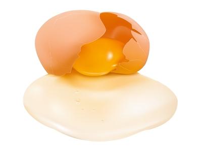 Vector illustration. Row Egg