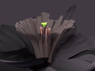 Narcissus flower study cinema4d corona render c4d