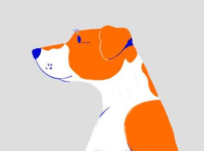 Oscar the Russell terrier