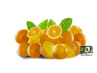 Oranges digital painting