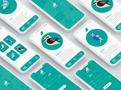 birding app kookaburra owl birds minimal web vector australia ui productdesign app illustration ui design