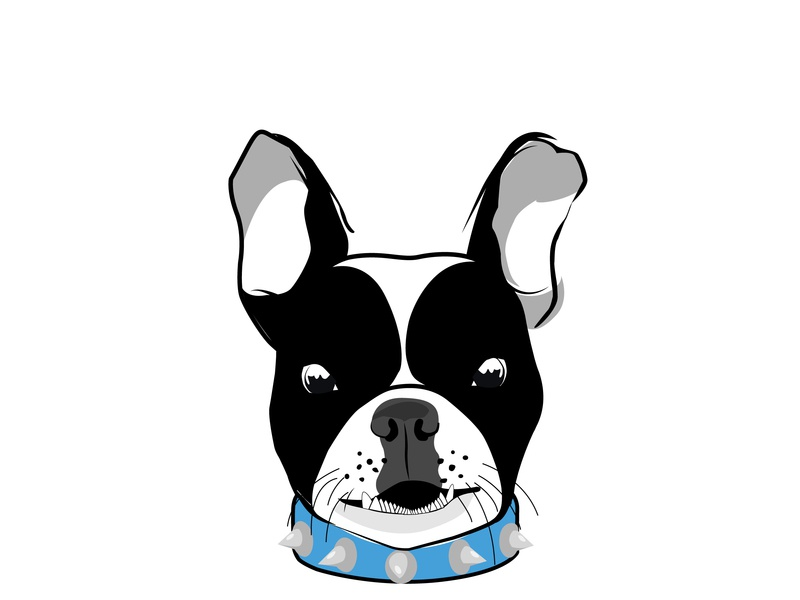 Bulldog vector illustration illustrator cc conceptart