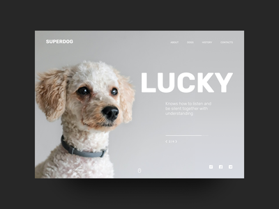 Dog shelter promo #3 main page dog promo typography web figma ui design