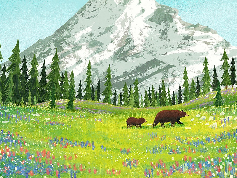 Mount Rainer landscape mountain pine tree flower wildflower bear park illustration