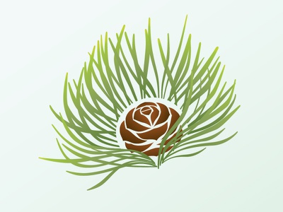 Rejected Pine rejected coniferous nature green tree needles pine cone pine