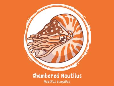 Huevember 06 // Chambered Nautilus