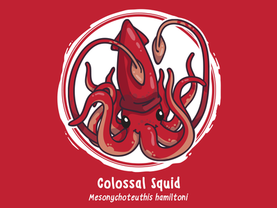 Huevember 09 // Colossal Squid byte size treasure cephalopod giant squid squid saltwater fish art challenge huevember illustration