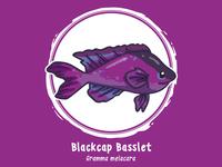 Huevember 13 // Blackcap Basslet