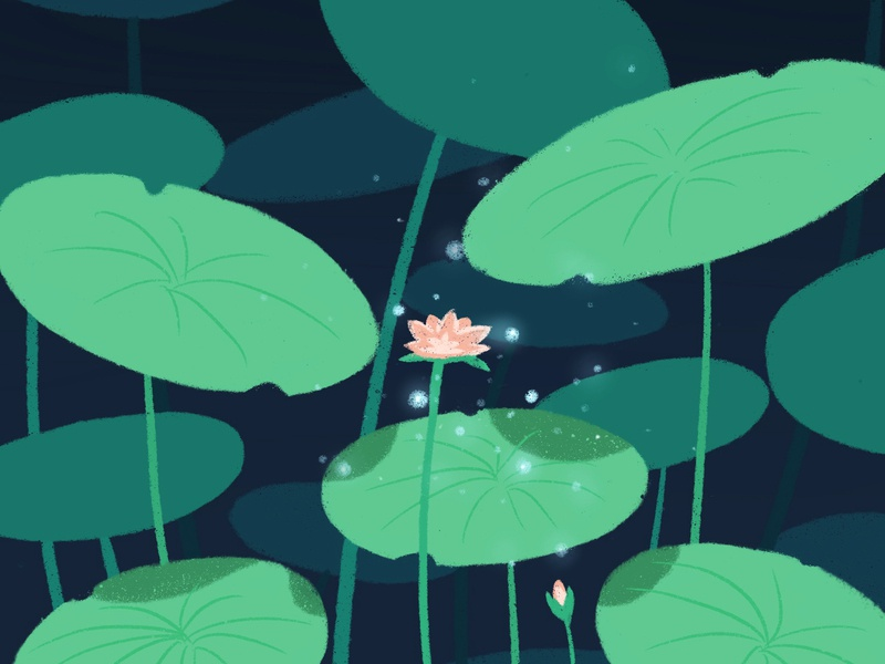Lotus design vector 设计 插图 illustration