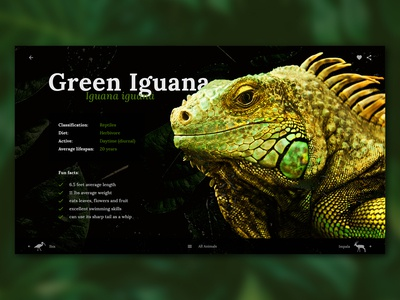 Green Iguana Educational Web App Page