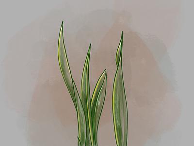 Sansevieria • Procreate sketches ipadpro procreate illustration