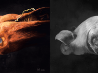 Vampire squid 2