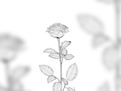 Cinema4d Rose rose glass wireframe vector interactive design illustration webflow design cinema 4d cinema4d