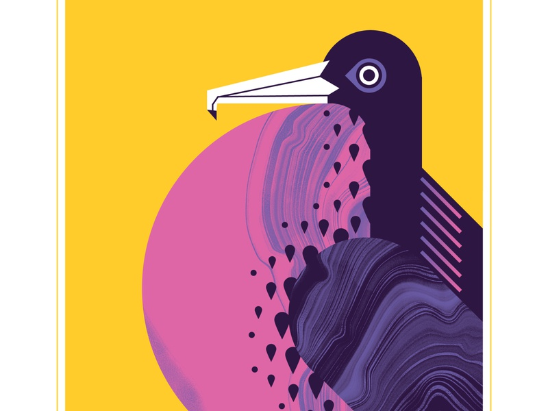 Male Great Frigatebird flight fly geometric pink bird texture design vector illustration