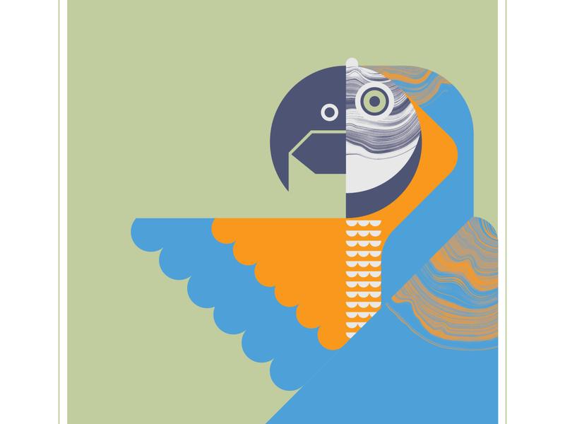 Macaw design illustration animal orange blue flight wing geometric texture parrot fly bird macaw