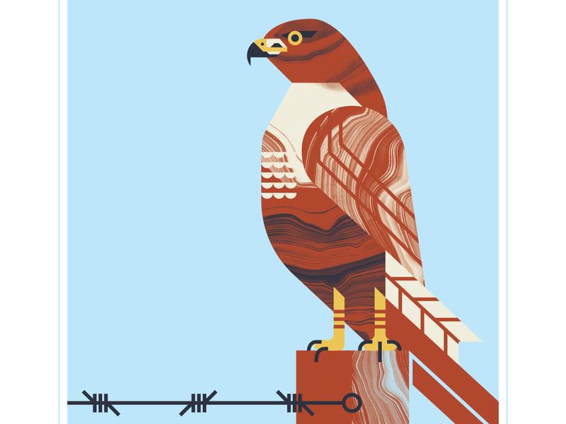 Red Tail Hawk hawks flight animal post wire perch fly feature tail hawk bird texture design vector illustration