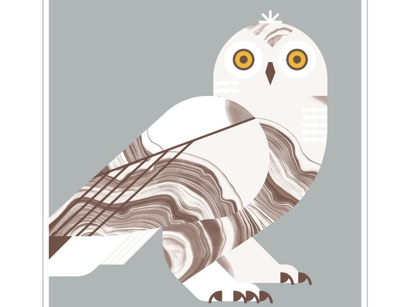 Snow Owl animal beak owls talon flight feather owl eyes bird texture design vector illustration
