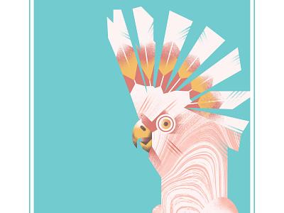 Major Mitchell's Cockatoo nature beak pink fly feather squawk bird illustration art illustration illustrator birds cockatoo