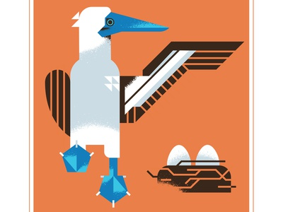 Blue Footed Booby Bird character design bird beak nest eggs wing texture animal flight booby blue vector illustration