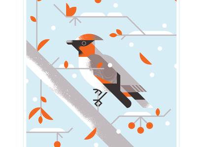 Japanese Waxwing audubon fly branch berry tree snow orange wing waxwing character bird texture design vector illustration