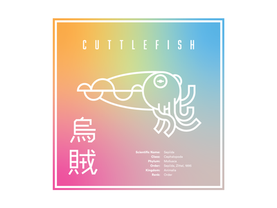 Cuttlefish   Fav Animal Warmup