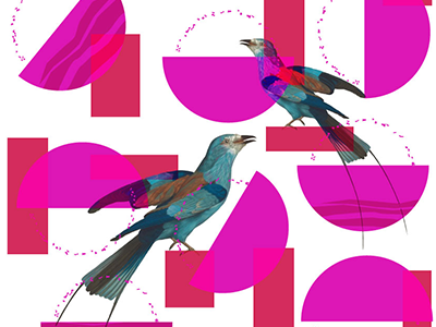 Weird Birds collage pattern surfacedesign line illustrator bird wip