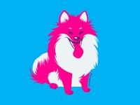 Pomeranian in Pink