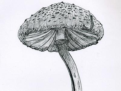 Inktober 2018 Day 1 - 'Poisonous' - Mushroom inktober 2018 black and white poisonous mushroom inktober 2018 day 1 pigment pen inktober day 1 inktober poisonous mushroom pigmentpen pigment pen october ink poison poisonous inktober