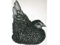 Inktober day 5: 'chicken' Drew a chicken.