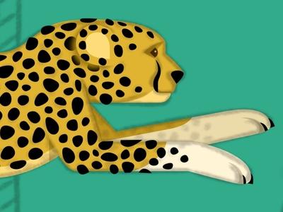 Cheetah WIP