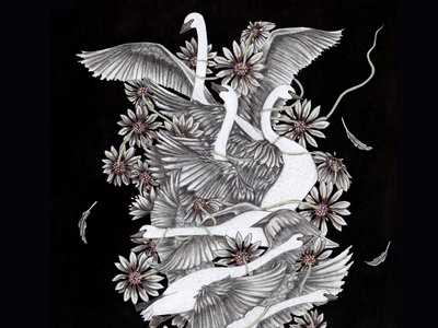 The Six Swans beauty needle and thread six swans swans painting grimms brothers herbalism flowers fairy tales drawing animals illustration
