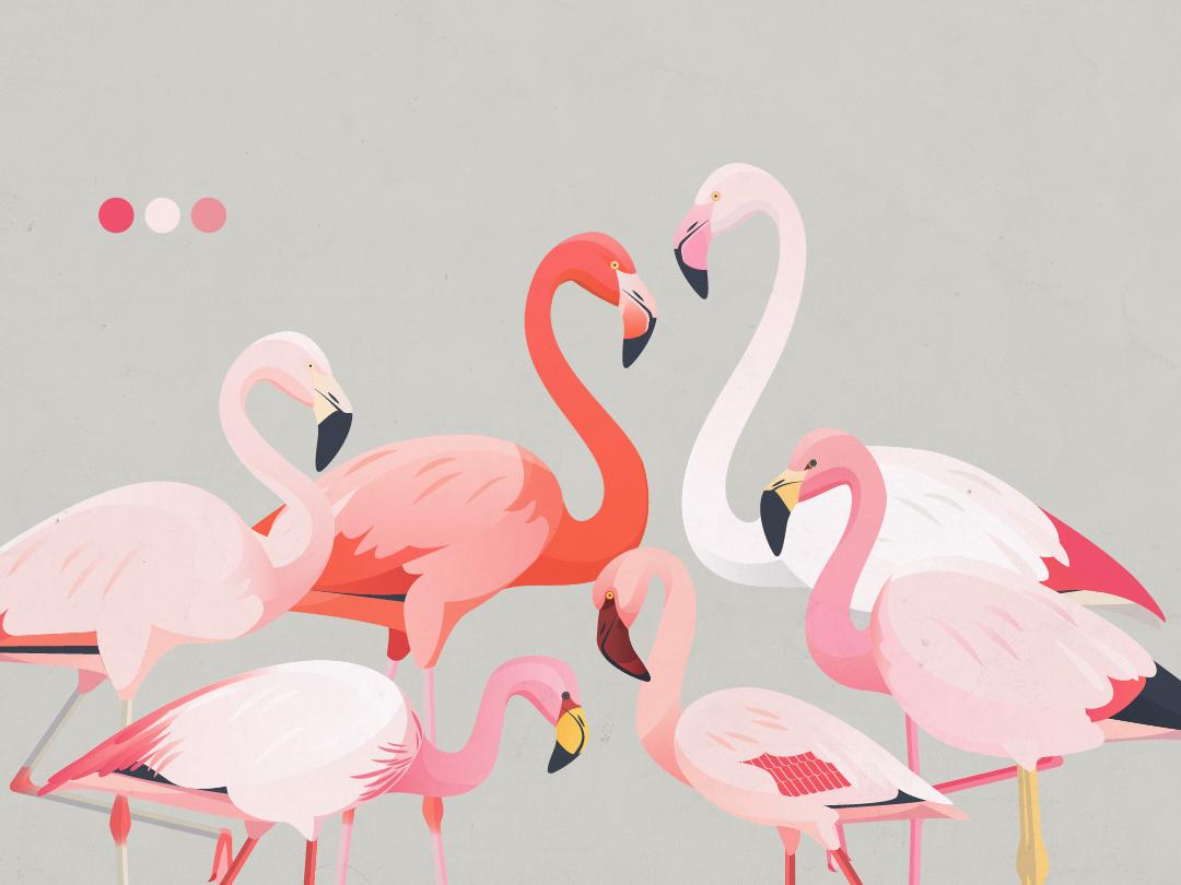 6 Flamingo Species vector flamingo birds animals fauna nature illustration