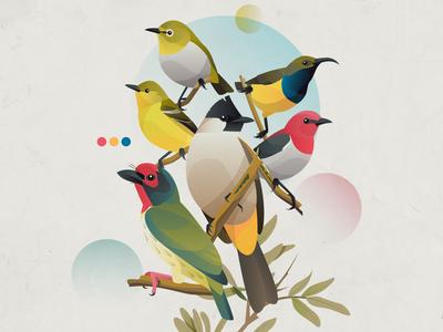 Birds of Jakarta
