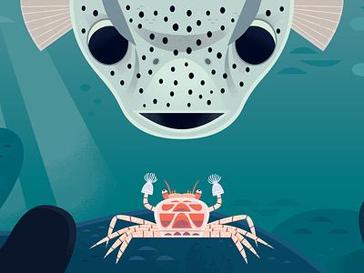 Boxer Crab picture book childrens book kidlitart fish aquarium ocean adobe illustrator vector wildlife nature animals illustration