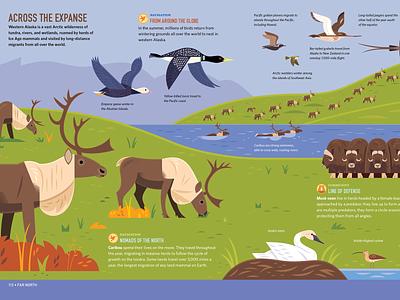 Across the Expanse childrens books science illustration science birds caribou infographic book design kidlitart alaska vector wildlife nature design animals illustration