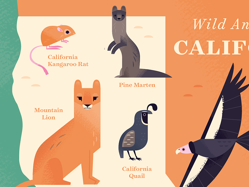 California Map Icon.Animals Of California Map By Alexander Vidal Dribbble Dribbble