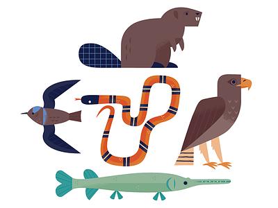 Animals of the Buffalo Bayou nature texas snake fish birds beaver wildlife animals design illustration