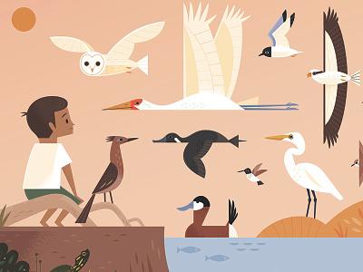 Bosque del Apache bird illustration birds nature wildlife animals animal illustrations childrens book illustration illustration