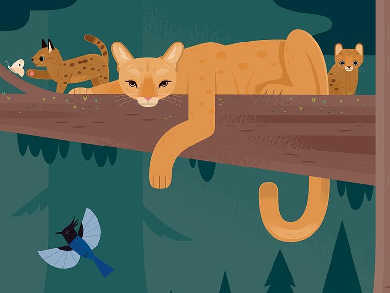 Puma Family national parks nature american wildlife mountain lion cougar puma wildlife california animals design illustration