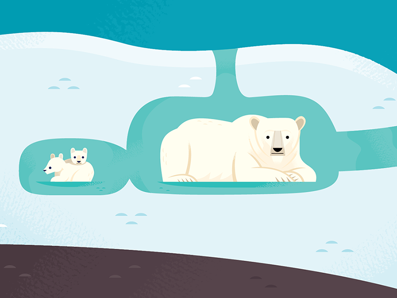 polarbear den dribbble bear den diagram wiring diagram data